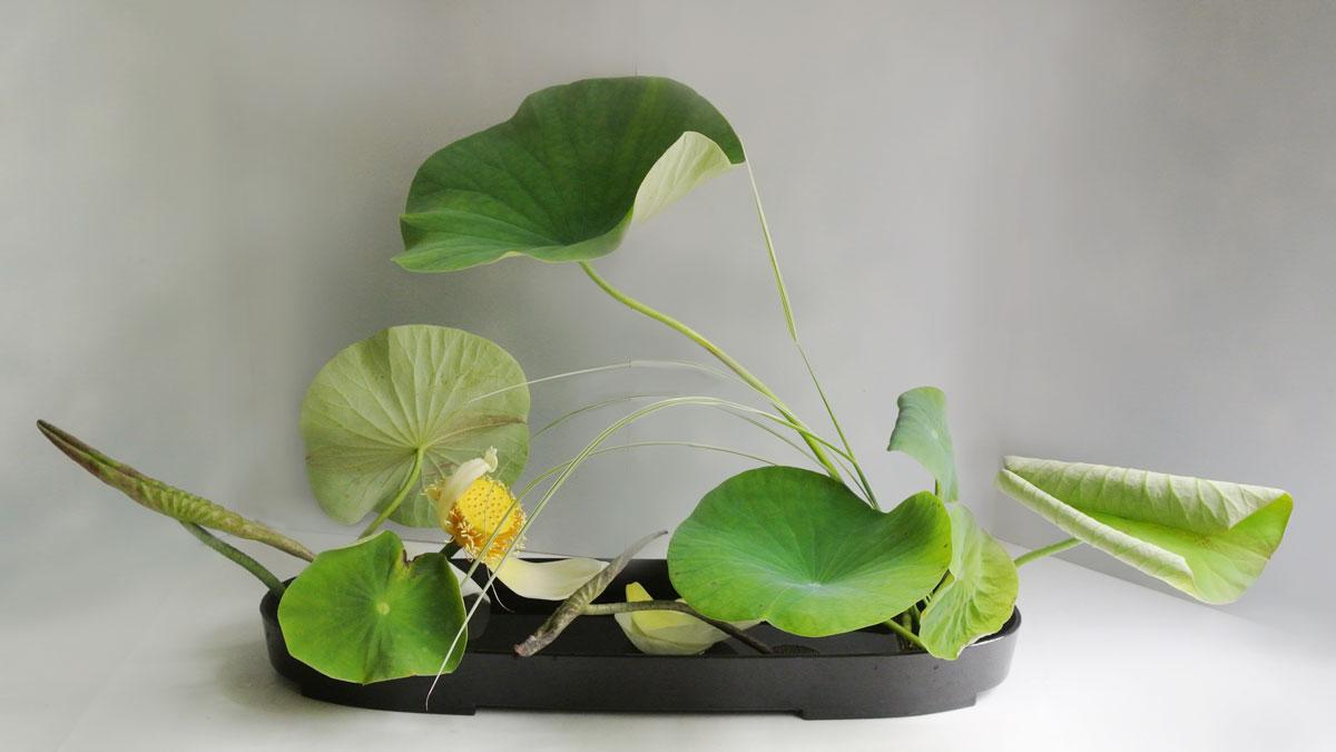 rimpa_lotus_2012_1